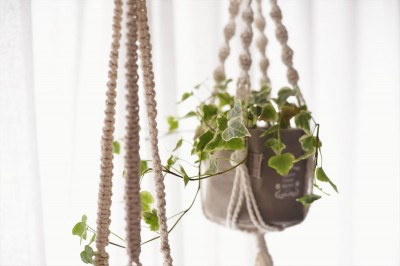 観葉植物 (インテリアも、暮らしやすさも)