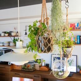集って楽しいカフェテイストの家 (吊り下げられた植物)