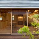 姉ヶ崎の家 大屋根と3つの庭|新築の写真 中庭、イロハモミジ越しの居間。