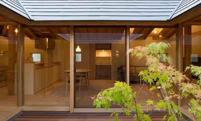 姉ヶ崎の家  中庭を囲うロの字形の平屋 |新築 (中庭、イロハモミジ越しの居間。)
