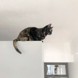 ウォークインクローゼットの壁がお気に入り (愛猫が駆け、風が通り抜ける、広々と心地良いインダストリアルな空間。)