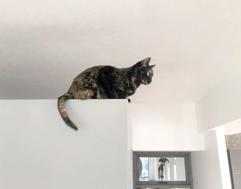 愛猫が駆け、風が通り抜ける、広々と心地良いインダストリアルな空間。 (ウォークインクローゼットの壁がお気に入り)