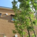 小さな家~緑の中で暮らす木のアトリエ付住宅~の写真 2階窓の借景をつくる
