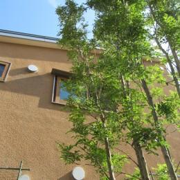 小さな家~緑の中で暮らす木のアトリエ付住宅~ (2階窓の借景をつくる)