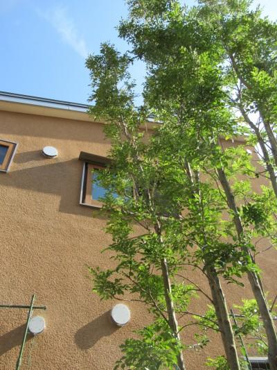 2階窓の借景をつくる (小さな家~緑の中で暮らす木のアトリエ付住宅~)