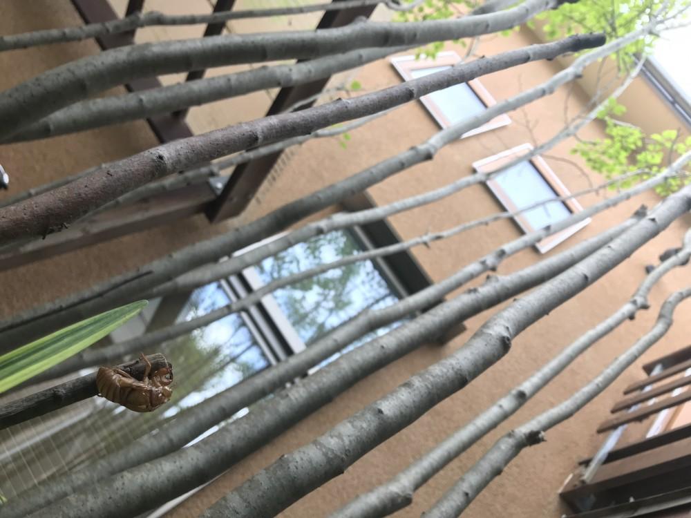 小さな家~緑の中で暮らす木のアトリエ付住宅~ (緑を植えると季節を感じます。)