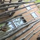 小さな家~緑の中で暮らす木のアトリエ付住宅~の写真 緑を植えると季節を感じます。