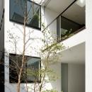 057鎌倉Mさんの家の写真 坪庭