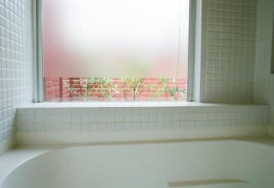 浴室から屋上庭園を眺める (浅草の家―2階にある庭)