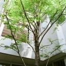 浅草の家―2階にある庭の写真 中庭のシンボルツリー
