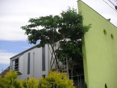 南側外観 (ガレージのある家|mm box)