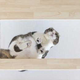 ♡CATS -ネコと暮らすー