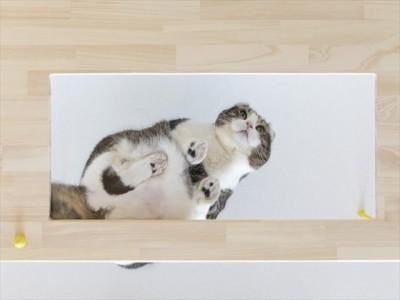 ♡CATS -ネコと暮らすー (アクリル板)