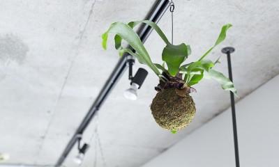 木とコンクリートの自然体な暮らし (天井)
