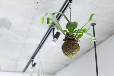 天井 (木とコンクリートの自然体な暮らし)