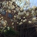 小さな家~緑の中で暮らす木のアトリエ付住宅~の写真 ジュンベリーの開花