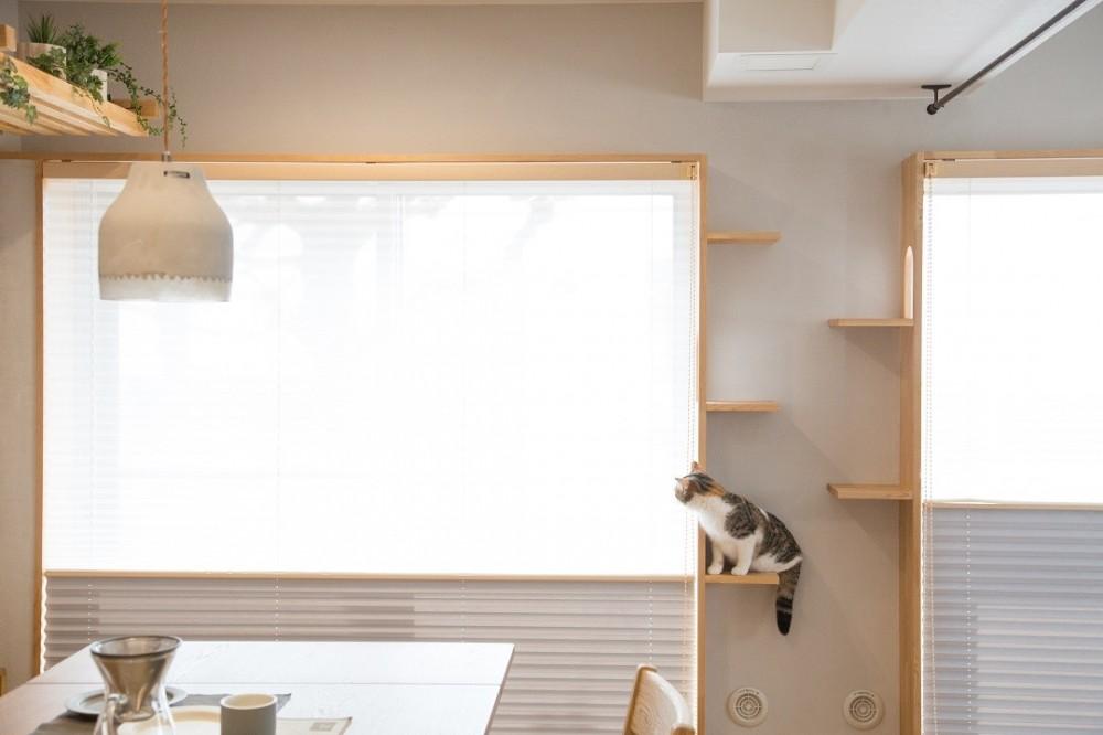 マイリノペットforねこ 猫とリビングでのびのび暮らしたい (マイリノペットforねこ リビング)