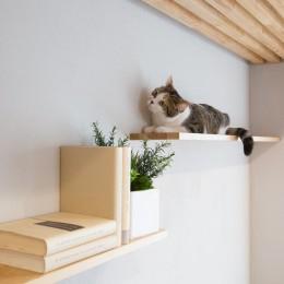 マイリノペットforねこ 猫とリビングでのびのび暮らしたい