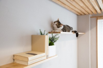 マイリノペットforねこ (マイリノペットforねこ 猫とリビングでのびのび暮らしたい)
