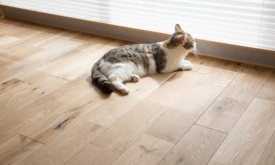 マイリノペットforねこ 猫とリビングでのびのび暮らしたい (マイリノペットforねこ)