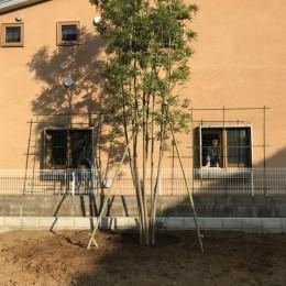 小さな家~緑の中で暮らす木のアトリエ付住宅~ (住まいは隣家の借景)