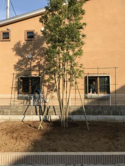 住まいは隣家の借景 (小さな家~緑の中で暮らす木のアトリエ付住宅~)