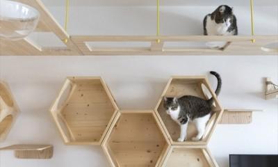 ♡CATS -ネコと暮らすー (自由に作る)
