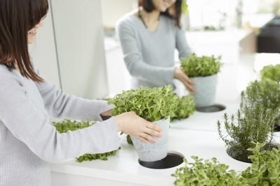 室内菜園コーナー (「GREEN DAYS」リノベーション×室内緑化で、理想の住まいを形にしていく)