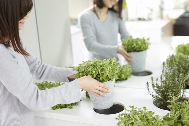 「GREEN DAYS」リノベーション×室内緑化で、理想の住まいを形にしていく (室内菜園コーナー)
