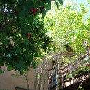 小さな家~緑の中で暮らす木のアトリエ付住宅~の写真 ジュンベリーの実が食べごろです