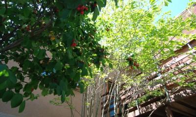 小さな家~緑の中で暮らす木のアトリエ付住宅~ (ジュンベリーの実が食べごろです)