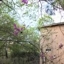 OUR CABIN OUR DIY~直営、DIYで小屋をつくる~の写真 アシタカツツジの開花