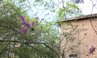 OUR CABIN OUR DIY~直営、DIYで小屋をつくる~ (アシタカツツジの開花)