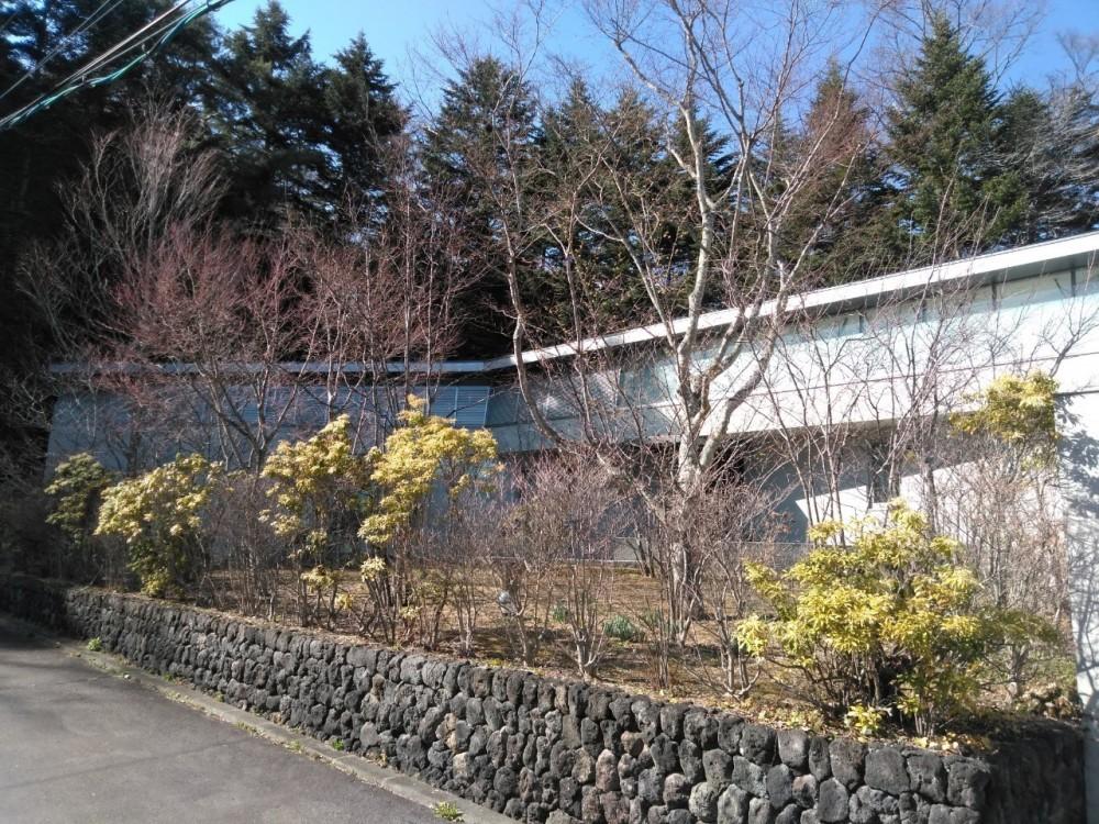 中軽井沢、地窓から裏手の広大な森が目に入る緑に囲まれた住まい (庭の全景)