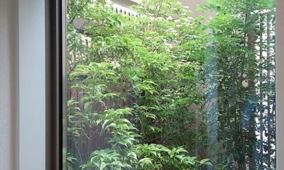 玄関ホールから中庭を見る|三つの陸屋根を持つコートハウス