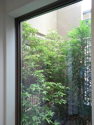玄関ホールから中庭を見る (三つの陸屋根を持つコートハウス)