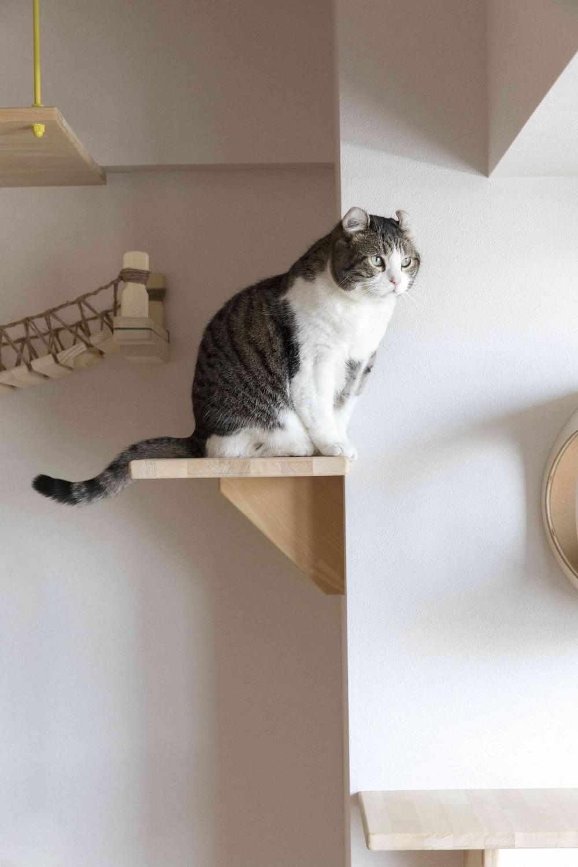 ♡CATS -ネコと暮らすー (一息)