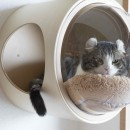 ♡CATS -ネコと暮らすーの写真 しっぽが可愛いですね♡
