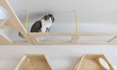♡CATS -ネコと暮らすー (お施主様にも猫たちにも幸せな空間ができました)