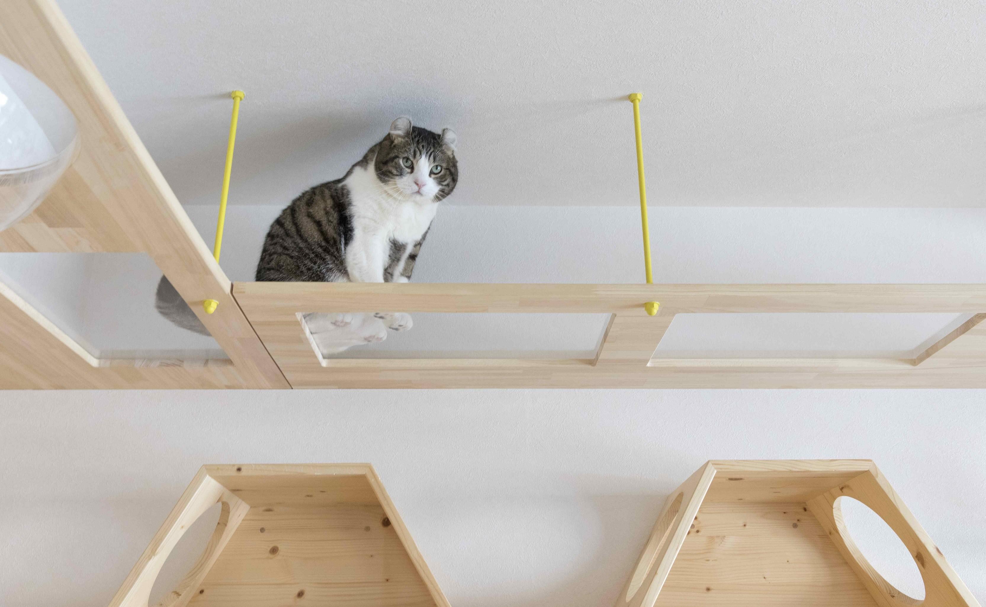 リビングダイニング事例:お施主様にも猫たちにも幸せな空間ができました(♡CATS -ネコと暮らすー)