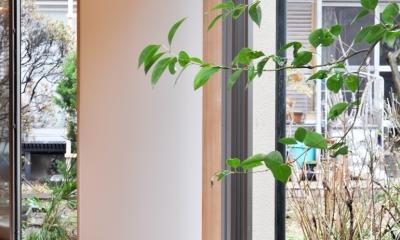 松庵の家 樹々と共生する家