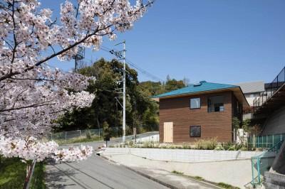 南東から見る。道路を挟んで桜並木と雑木林が広がっている。外壁は焼杉縁甲板貼り。屋根はガルバリウム鋼板一文字貼り。 (四つ角の家|家の中に4つの小さな家がある住宅【大阪府堺市】)