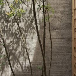 突抜の町家/素材の質感 京町家リノベーション (庭 / 植栽)