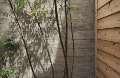 庭 / 植栽 (突抜の町家/素材の質感 京町家リノベーション)
