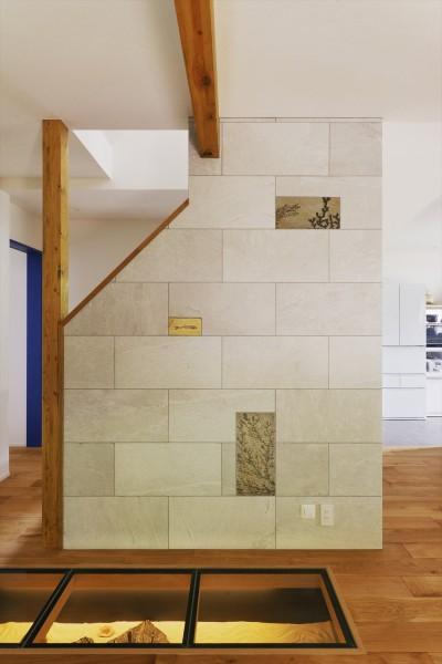 化石のコレクション (T邸_Maison du Musée)