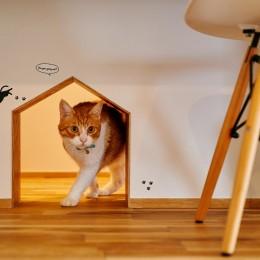 猫と暮らす庭付き戸建て