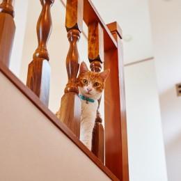 猫と暮らす庭付き戸建て (猫と暮らす庭付き戸建て)