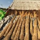 愛知の茅葺き再生[茅葺き]の写真 新しく屋根を葺く為のススキ