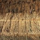 愛知の茅葺き再生[茅葺き]の写真 上が古い茅、下が新しい茅