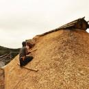 愛知の茅葺き再生[茅葺き]の写真 ザクザクと茅を刈り込んでいく
